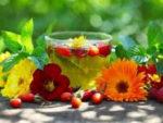 чай напитки отвары из трав
