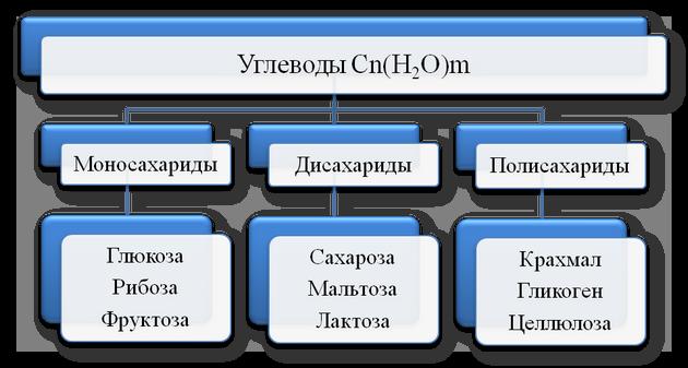 Что такое углеводы, простые углеводы, сложные углеводы