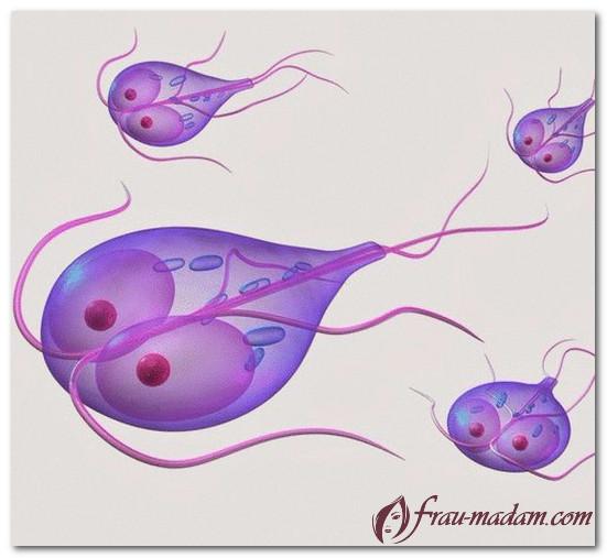 тыквенные семечки от паразитов как принимать