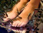 Фиш (fish) пилинг — рыбки, которые делают пилинг лица, тела и ног