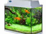 Как поставить аквариум по принципам фэн-шуй
