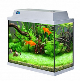в какой зоне должен находиться аквариум по фэн-шуй