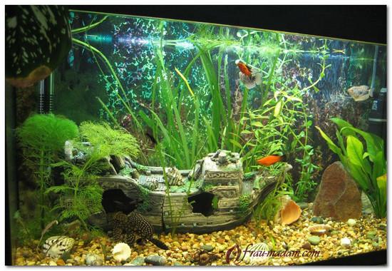оформление аквариума по фэн-шуй