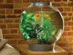 Как выбрать аквариум по фэн-шуй для дома и офиса