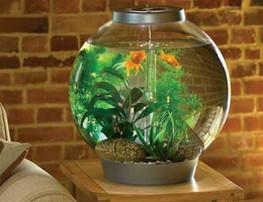 какая форма аквариума для фэн-шуй