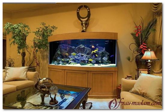 сколько рыбок лучше тумба аквариума
