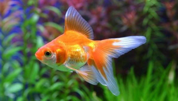 какие рыбки лучше