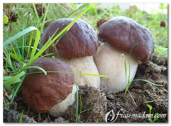 содержание витамина Д в грибах